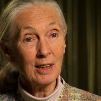 An Interview with Jane Goodall